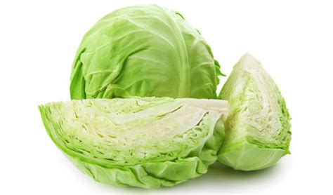 can dogs cabbage can dogs eat cabbage can dogs eat this