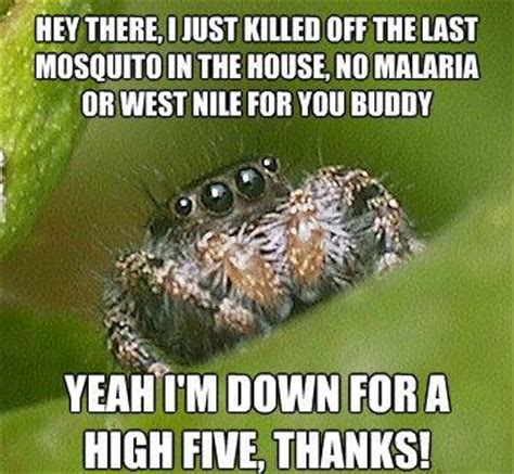 Misunderstood Spider Meme - the sad world of the misunderstood house spider