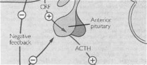 acth stimulation test acth cosyntropin stimulation test causes symptoms treatment acth cosyntropin