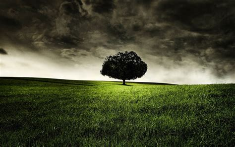 wallpaper dark tree wallpapers lonely tree photography wallpapers