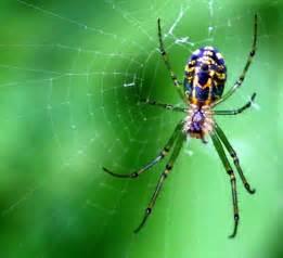 oga web spider webs inthesebodies