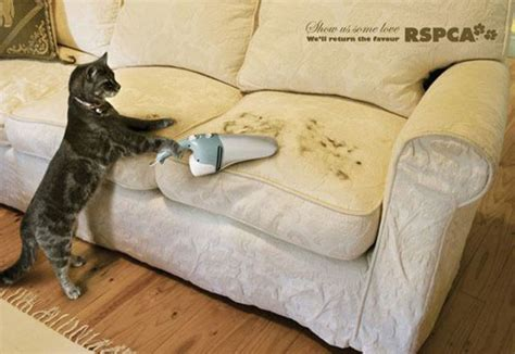 cleaning dog hair from couch really funny print ads part 2 23 pics izismile com