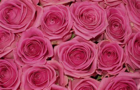imagenes jpg flores plaza de las flores en murcia 30 opiniones y 18 fotos