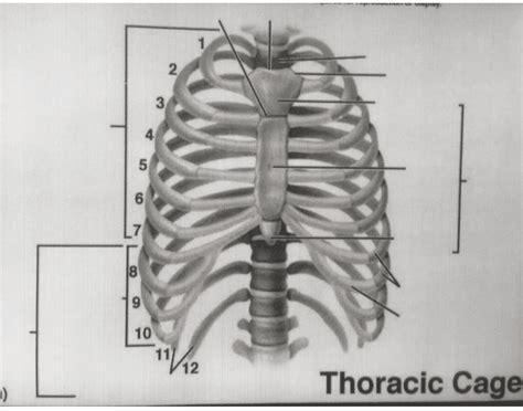 thoracic cage diagram thoracic cage diagram