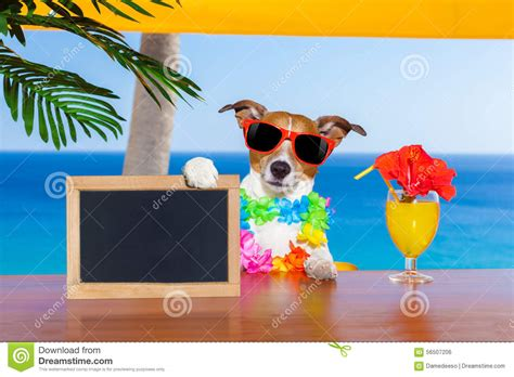 cocktail dogs cocktail stock photo image 56507206