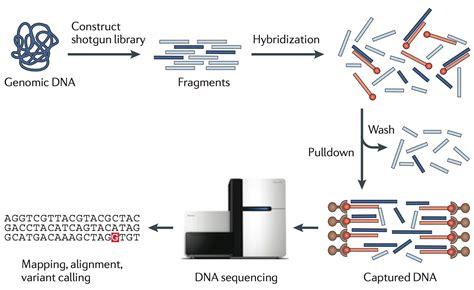 exome sequencing illumina exome sequencing whole exome sequencing cost snp