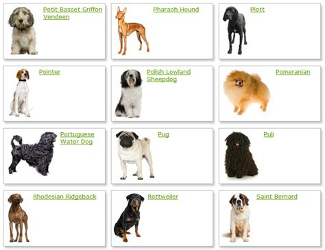 list of dogs all list of different dogs breeds breeds list with picture