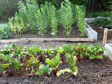 The Abcs Of Homesteading Homesteading And Livestock Cold Weather Vegetable Gardening