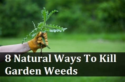 how to kill weeds in a vegetable garden ways to kill garden weeds