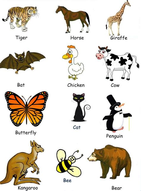 imagenes de animales en ingles y español hermosas im 225 genes de animales dom 233 sticos en ingles para