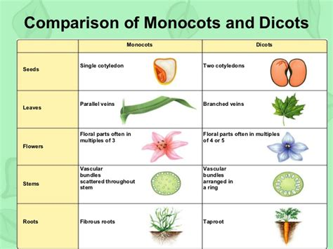 Section 22 1 Introduction To Plants by Section 22 1 Introduction To Plants Ch 22 Plants By Shuifanglj Lecture Chapter 1 Biology And