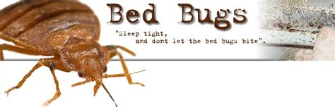 how to get bed bugs out of clothes how to kill bed bugs on clothes 28 images special