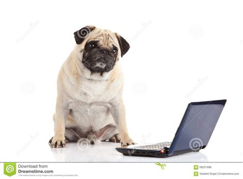 Pc Dogs computer isolated on white background stock photo
