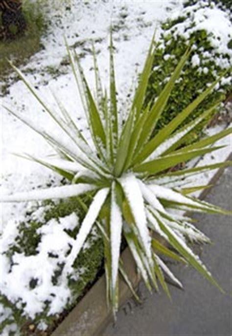 pflanzen blumen kakteen f 252 r garten balkon 187 palmen