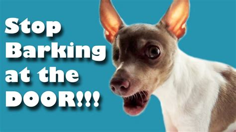 how to make puppy stop barking stop barking at the door
