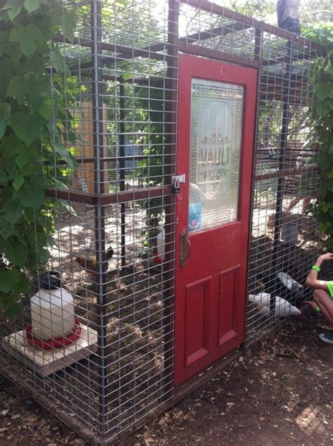 can i have chickens in my backyard can you have chickens in your backyard 28 images 100 backyard hens the chicken how