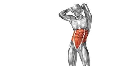 golf swing biomechanics anatomy abdominal muscles golf loopy play your golf like a