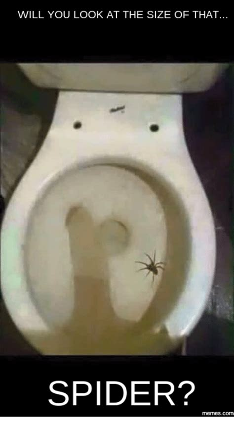 look at that 25 best memes about toilet seat spider toilet seat spider memes