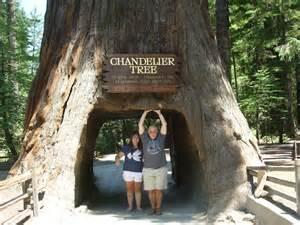 Chandelier Tree Leggett Enjoy Roadside Attractions Along California S Redwood