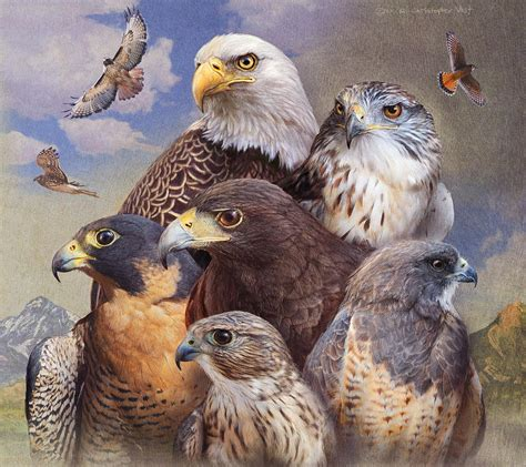 birds of prey western colorado by r christopher vest