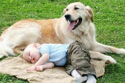 is a golden retriever a family 7 reasons your family needs to adopt a golden retriever miss molly says