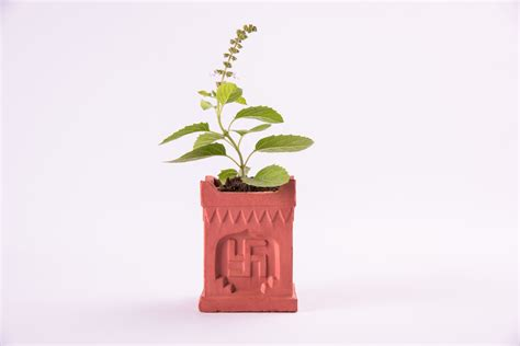 Tulsi Planter by 17 Reasons Why You Must A Tulsi Plant Even If You