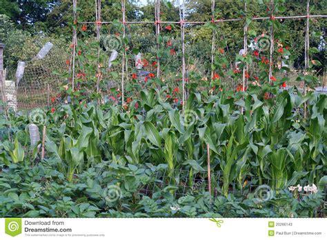 Organic Vegetable Gardening Organic Vegetable Gardening Decorating Clear