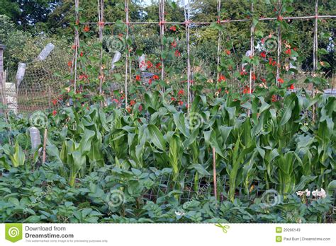 Organic Vegetable Garden. Stock Photos Image: 20266143