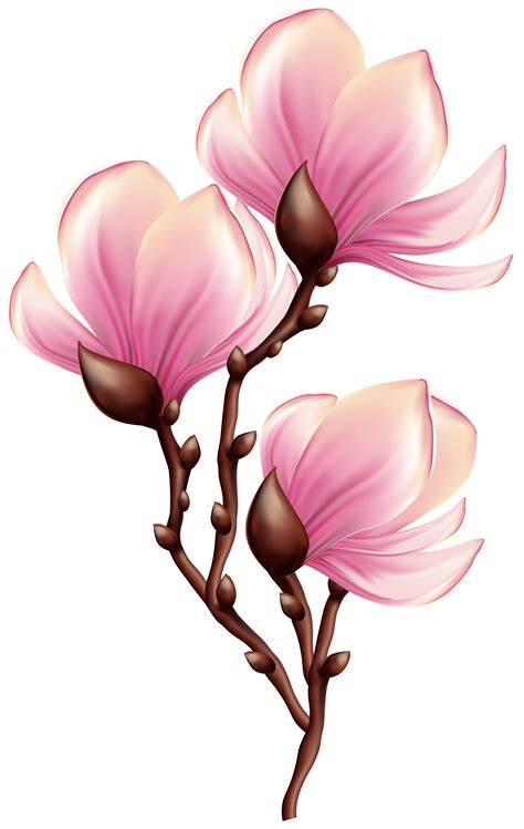 beautiful blooming branch transparent png clip art image