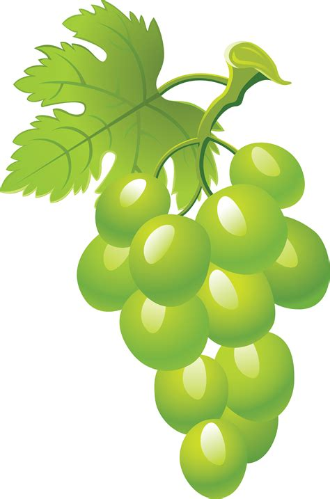 foto clipart images for gt green grapes clipart cliparts co
