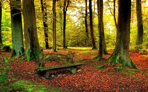 bench in forest leaves trees forest woods sunlight autumn fall nature