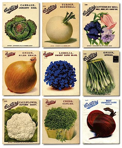 Alys Fowler S Favourite Vegetable Seed Catalogues Vegetable Garden Seed