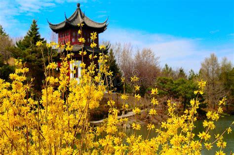 giardino cinese giardino cinese immagine stock immagine di molla oriente
