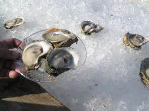 can dogs eat oysters salty coast friendly adventures in florida fido