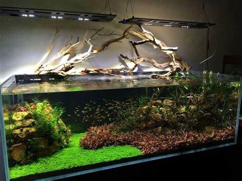 Aquascape Tank For Sale by 405 Best Aquarium Iwagami Style Aquaticape Aquascape Planted Tank Shrimp Images On