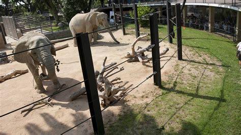 fotos animales zoo barcelona animales colau debe decidir qu 233 hacer con el zoo de
