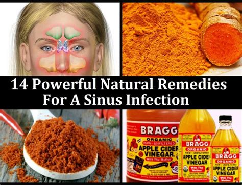 best sinus infection medicine remedies for dogs with sensitive skin