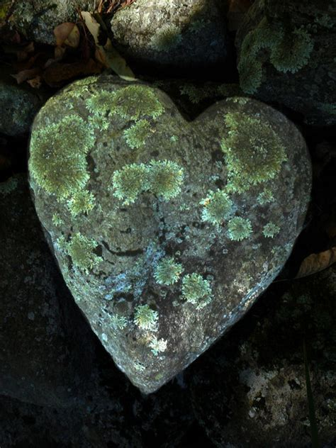 pattern formation heart heart shaped rock the hearts have it pinterest