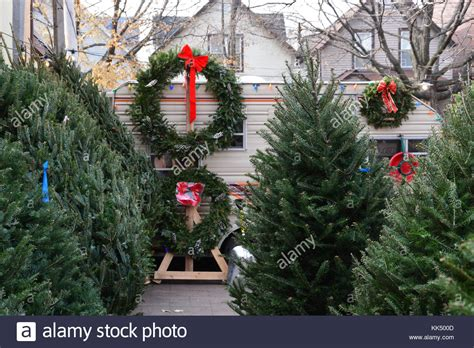 chicago christmas tree lot chicago tree stock photos chicago tree stock images alamy
