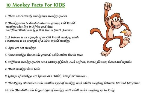 new year facts about the monkey monkey facts for interesting facts
