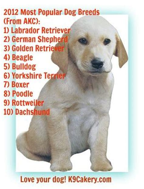 most common breeds most popular breeds 2012