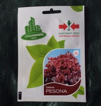 Promo Benih Selada Merah Lettuce Rosa Mr Fothergills Kemas benih selada merah pesona 100 biji panah merah bibitbunga