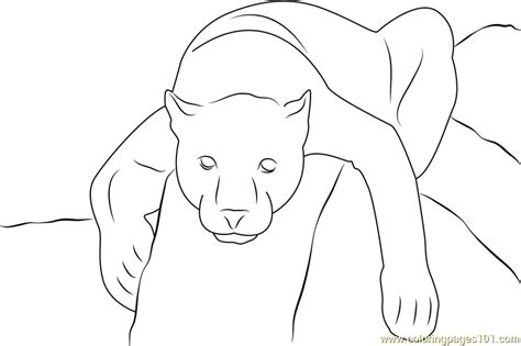 Black Panther Coloring Page Free Panther Coloring Pages Black Coloring Pages