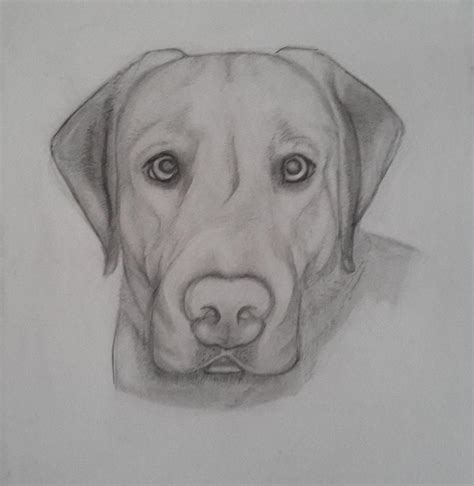 best drawing s best friend drawing by bell