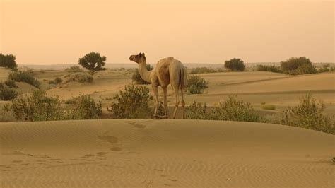 thar desert location where is the thar desert located reference com