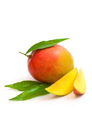 pianta di mango in vaso pianta di mango keitt in vaso elevata produttivit 224 mywlife