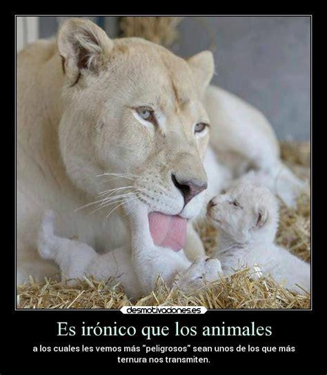 imagenes de animales adorables im 225 genes y carteles de adorables desmotivaciones