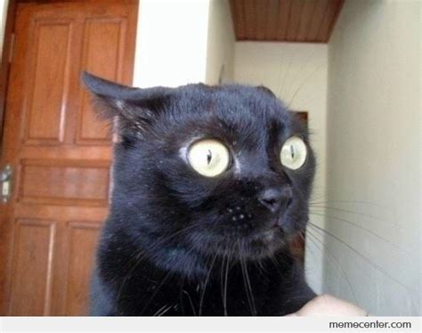 Shocked Cat Meme - surprised cat is surprised by ben meme center