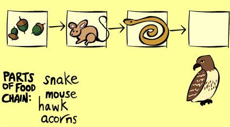 la catena alimentare scuola primaria catena alimentare gioca e impara osmosi delle idee