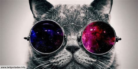 imagenes interesantes para twitter encabezado para twitter de gato de otro espacio katia